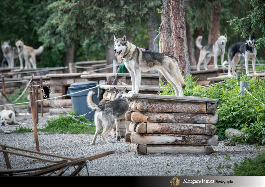 Alaska 11 Alaska