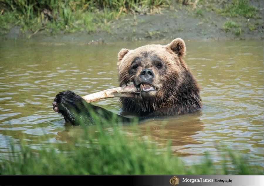 Alaska 31 Alaska